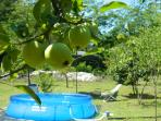 the paddling pool in the unique orchard