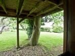 View from the kitchen's stable door - the beech tree that grows through the balcony.