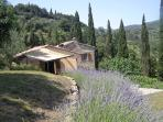 The lavender wall/walk is a haven for butterflies and scented with Tuscan magic