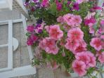 The terrace is flowered all year round