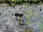Dogs welcome - Alfie enjoying Cardinham Wood