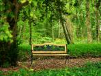 A bench in the forest of the property