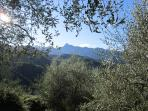 Olive groves and the spine of low mountains separating the Lunigiana from the sea...