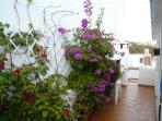 The roof terrace in bloom