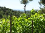 The seeing from the garden above the vines
