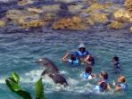 Dolphin cove -5 minutes drive away