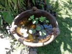 Water Lilly in the garden, one of many water features at Angel Villa