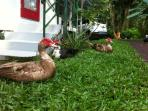Our ducks will greet you.