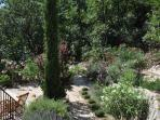 Your private gardens, rosemary, thyme, lavendar, olive & cyprus
