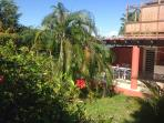 Tropical plantings for beauty and privacy