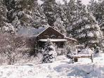 Log Cabin Home Vacation in the tall  Pine Trees w