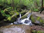 There are many short hikes to cool cascading streams.