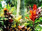 ...landscaped with vivid tropicals!