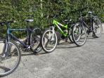 2 adult bicycles and 1 junior for you to use