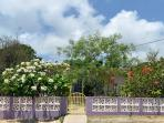 Welcome to CASITA ROSITA with its lush tropical yard