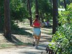 Jogging in the pine forest