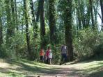 Healthy walk in the pine tree forest
