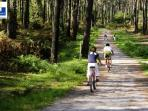 Bicycle paths in the Chiberta Forest