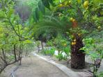 lovely grounds with fruit tress including advocados, oranges, lemons, figs, almonds and more
