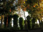 Ivy pillars in the back yard