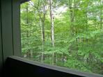 Summer Wooded View from Deck