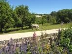 Paddock next to the garden and far reaching views.