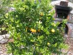 Orange tree and outside oven