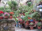 A stunning terrace garden in the town