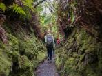 Walk a private trail in the lush green rainforest of the Hawaii Volcanoes National Park at Kilauea.