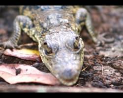 Ecolodge Tres Lagunas - Selva Lacandona