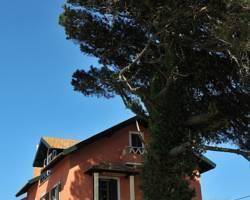 She Pine Tree House