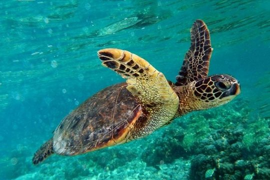 Tripadvisor Modderbad En Koningsgraven Bij Dalyan Turtle
