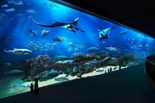 Skip the Line: S E A  Aquarium Day Pass Including Hotel Pickup from  Singapore