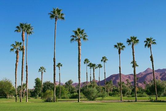 homofil hastighet dating Palm Springs mest populære datingside i UK