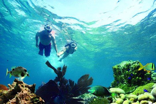 TripAdvisor  Key West Living Coral Reef Snorkel Adventure provided by Fury Water Adventures Key