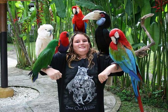 Amazing Private Tours Bali Bird Park And Tegenungan Waterfall