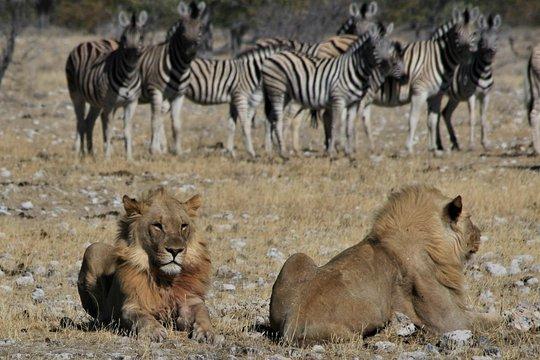 Dating membri Botswana San Valentino idee se appena iniziato incontri