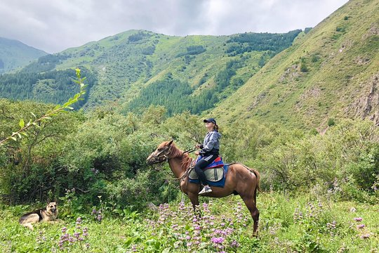 Dating Bishkek Kirgisia