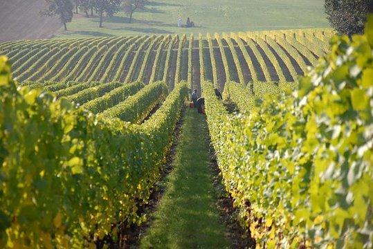 Tripadvisor Fredericksburg Hill Country Wine Tour