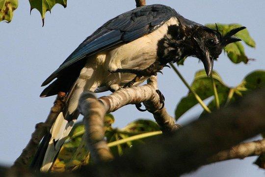 bird watchers dating site Online datingprogramma