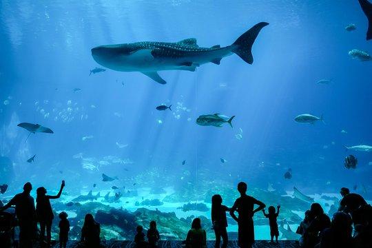 Georgia Aquarium Admission Prices