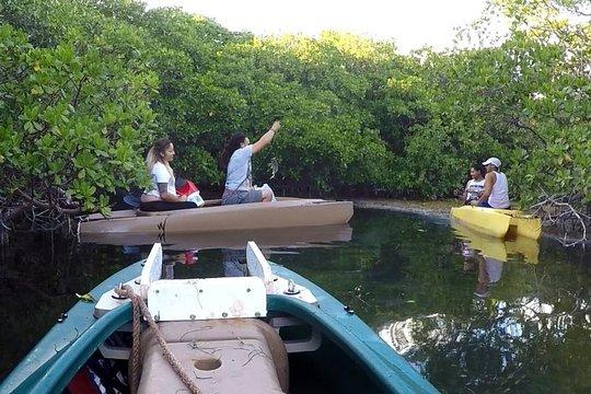 Mangrove Forest Bali Canoe Eco Tour