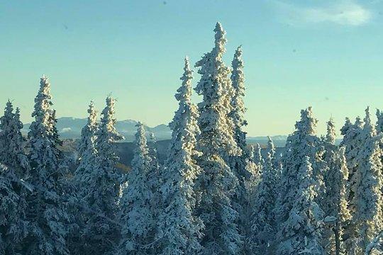 Polarkreis Alaska Karte.Tour Zum Nördlichen Polarkreis Und Zu Polarlichtern Ab Fairbanks