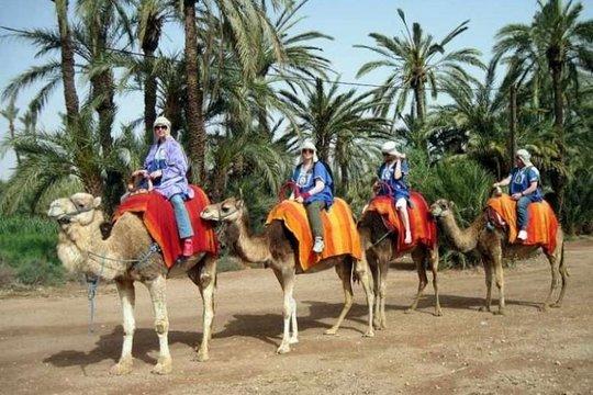 """Résultat de recherche d'images pour """"camel riding marrakech"""""""