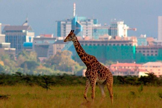 Nairobin paras dating site