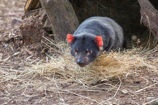 Wicked Wombat dating Jeg elsker dating nettsted