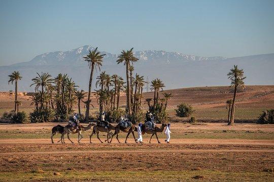 Kamelritt von Marrakesch durch die Wüste und Palmenhaine mit marokkanischem  Tee und Imbiss
