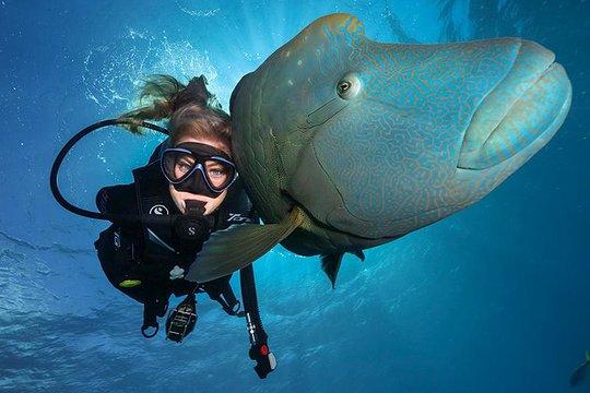 Finding Reputable Scuba Diving Classes