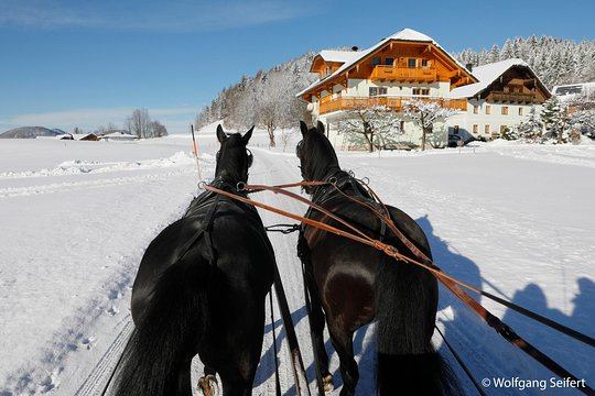 Christmas Horse Pictures.Christmas Horse Drawn Sleigh Ride From Salzburg