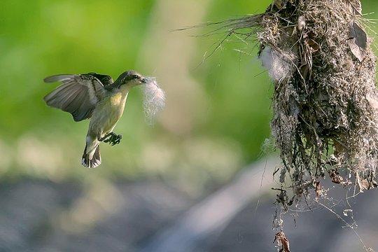 dating sites voor bird watchers